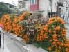 錦上荃灣 2013 February 23 - 頁 2 629b70306714780