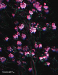 http://thumbnails109.imagebam.com/33096/433aa5330958310.jpg